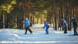 В Воронеже назвали дату массовой гонки «Лыжня России»