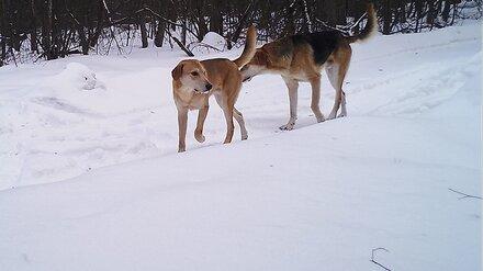 Бродячие собаки начали наступление на Воронежский биосферный заповедник