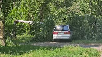 В Воронеже во время урагана берёза рухнула на иномарку