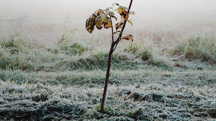 МЧС предупредило воронежцев о заморозках