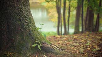 В Воронеже появятся четыре новые особо охраняемые природные территории