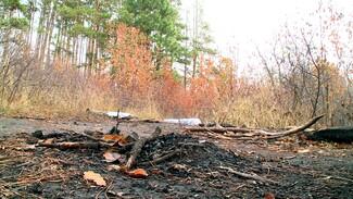 Сожгли черешню и оставили послание. Воронежцы объявили войну из-за закрытого ботсада
