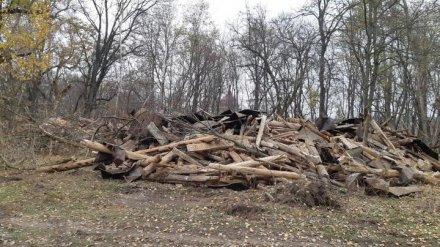 Прокуратура начала проверку сноса уникальной усадьбы под Воронежем