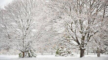 Воронеж накроет сильный снегопад