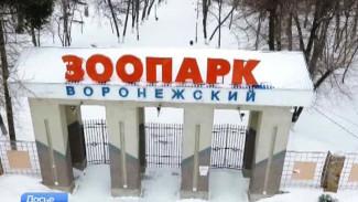 Воронежский зоопарк откроет свои двери для посетителей 6 февраля