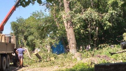 Жители воронежского райцентра сообщили о вырубке деревьев под сквер при храме