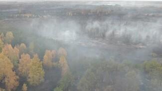 Памятник природы в Воронежской области загорелся по вине поджигателя картофельной ботвы