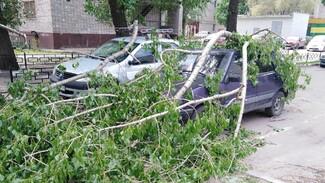 В Воронеже дерево упало на припаркованные у дома автомобили