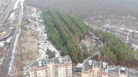 Мэрия вновь пообещала спасти от застройки лес в воронежском микрорайоне