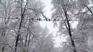Мощный снегопад оставил без электричества 15 тыс. жителей Воронежской области