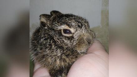 На турбазе под Воронежем у туристов отобрали затисканного зайчонка