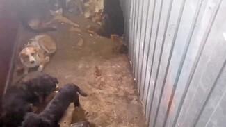 Прокуроры нагрянули в приют для собак после жалоб воронежцев на ужасные условия