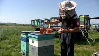 Воронежские пчеловоды пожаловались на дефицит раннего мёда из-за холодной весны