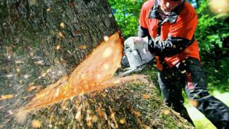 В Воронежской области сельчанин спилил на дрова клёны стоимостью 90 тыс. рублей