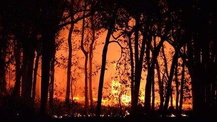 Мощный пожар в заповеднике в Воронежской области начался из-за стрельбы с вертолёта