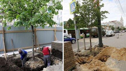 На проспекте Революции в Воронеже начали выкапывать деревья