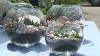 Крошечные кактусы и цветы с запахом вина. Чем удивила выставка в воронежском ботсаду