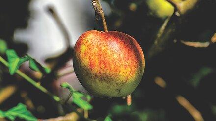 Воронежские застройщики более 8 часов бьются на торгах за яблоневые сады
