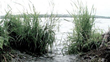 В Воронежском водохранилище нашли убитого мужчину