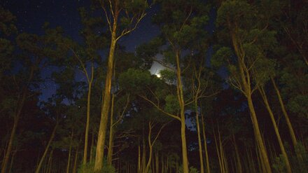 Трое подростков заблудились в лесу в Воронежской области