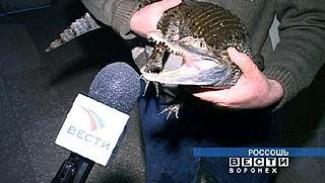 Уникальную коллекцию рептилий согласен подарить Россоши Александр Крафт