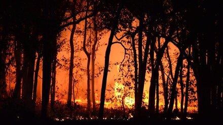 Воронежские спасатели получили более 140 сообщений о пожарах за полдня