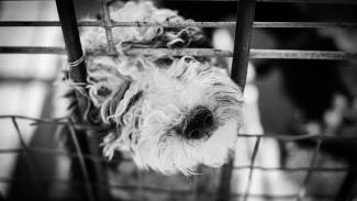Не товар. В России потребовали запретить торговлю собаками и кошками в зоомагазинах