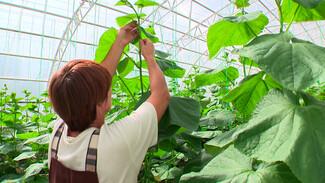 Воронежские власти утвердили законодательную базу для развития органического земледелия