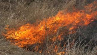 В Воронежской области ландшафтный пожар подобрался к психоневрологическому интернату