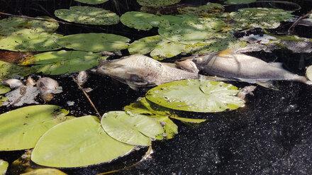 Воронежцы сообщили об экологической катастрофе на реке Токай