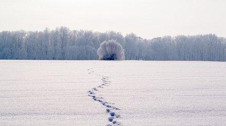 «Продимекс» проверит жизнеспособность озимых на воронежских полях