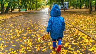 Дожди придут в Воронежскую область после выходных