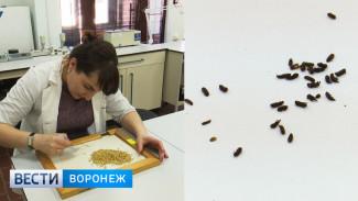 Проверка по жалобам работников подтвердила нарушения на элеваторе в Воронежской области