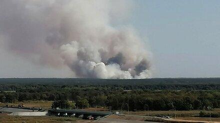 Масштабный пожар случился в лесу возле воронежского села