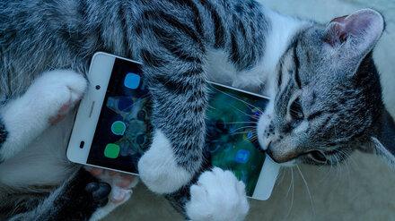 Питомцы и IPhone. Аналитики выяснили, что воронежцы готовы отдавать бесплатно