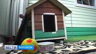 В Воронежской области от укусов клещей гибнут домашние питомцы
