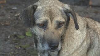 Собачий ковчег. Зачем в Воронеже бездомных животных готовят к плаванию по водохранилищу