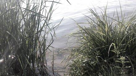 В Воронежской области из реки Дон достали труп женщины