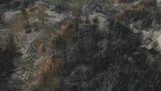 Мёртвый пейзаж. Когда на месте горельников в Воронежской области появится лес