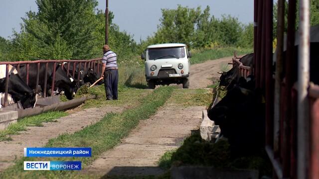 «Все любят свою работу». Как местные трудятся в нижнедевицкой Вязноватовке