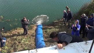 В реку Икорец в Воронежской области выпустили более 500 тыс. мальков сазана
