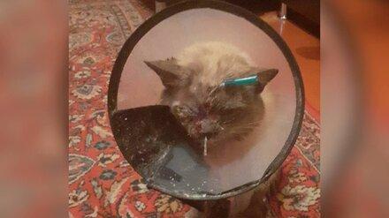 В воронежском селе неизвестный выстрелил вглаз чужому домашнему коту