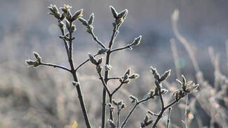 Воронежские синоптики пообещали заморозки в конце недели