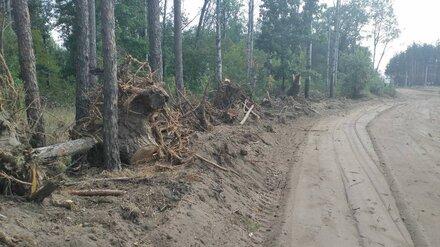 Прокуратура заинтересовалось вырубкой деревьев в Воронежской нагорной дубраве