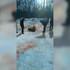 Воронежцы показали видео кровавых собачьих боёв в санатории