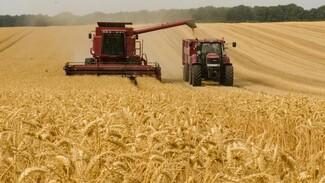 Воронежские предприятия «Продимекса» завершили уборку зерновых