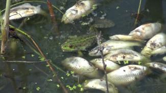 Воронежские сельчане пожаловались на невыносимую вонь из-за массовой гибели рыбы в пруду