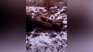 Скорая примчалась на вызов к муляжу трупа на обочине в Воронежской области