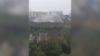 Пожар в лесу произошёл в Воронеже рядом с жилыми домами
