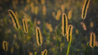 В Воронежской области создадут новый природный заказник «Битюгский»